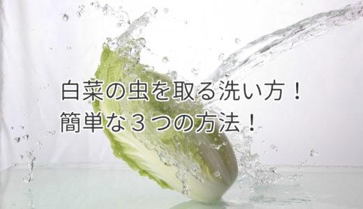 白菜の虫を取る洗い方!徹底的に虫を取りたい方必見の3つの方法!