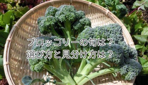 ブロッコリーの旬は?選び方と見分け方の美味しい特徴はこれだ!