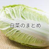 白菜まとめ|栄養と効果、保存方法、旬と選び方、黒い点、白菜の虫