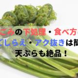 こごみの下処理・食べ方は?下ごしらえ・アク抜きは簡単!天ぷらも絶品!