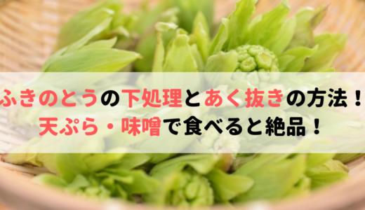 ふきのとうの下処理とあく抜きの方法!天ぷら・味噌の食べ方が絶品!