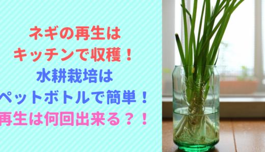 ネギの再生は水耕栽培のペットボトルで簡単!再生は何回出来る?