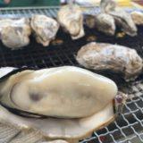 牡蠣の食べ過ぎはキケン?1日の個数は?栄養・カロリーはどうなる?